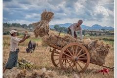Harvesting Myanmar