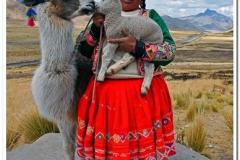 Llama Kiss in Peru II