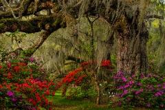 Magnolia Gardens 2015