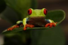 Lil froggy