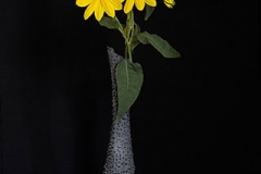 Vase And Yellow Flowers