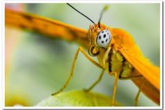 Julia Butterfly-2