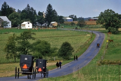 Amish Buggoes in Maryland No 2