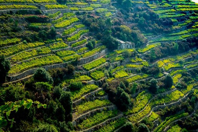 Volastra Vineyard